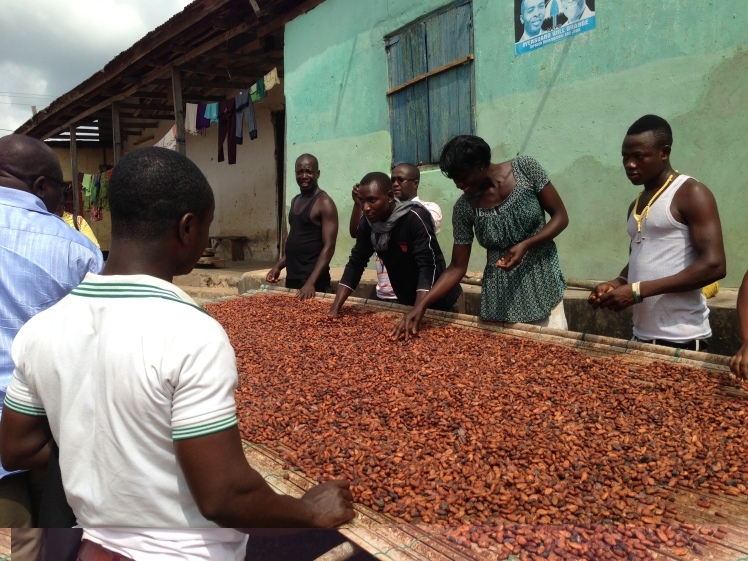 Drying out the cocoa beans