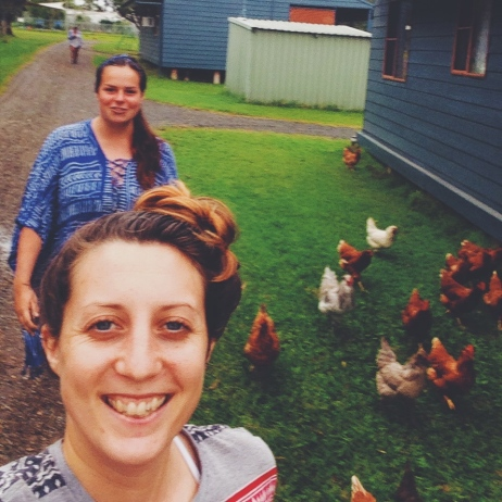 Chicken taming at the farm