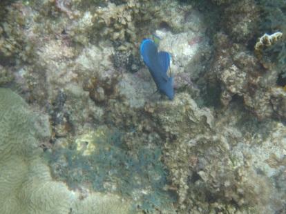 Coral Cay Panama