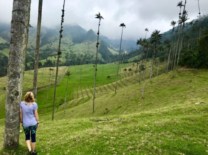 Cocora Valley, Colombia